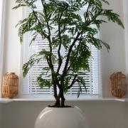 acacia bush kunstplant