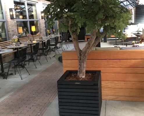vijgenboom kunstboom
