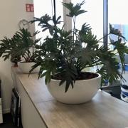 kunstplanten Cascara schaal